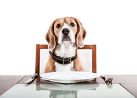 Dog sitting at restaurant table
